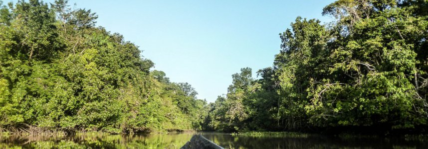 """Araguato Expeditions"" Delta del Orinoco - Venezuela"