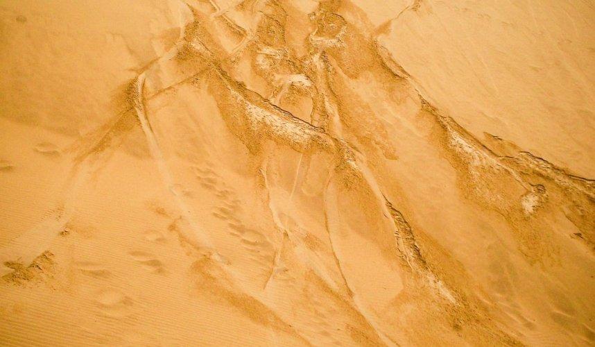"""""""Araguato Expeditions""""   Sandboad - Sandboarding   Medanos de Coro   Venezuela"""